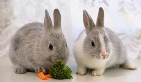 Основы кролиководства