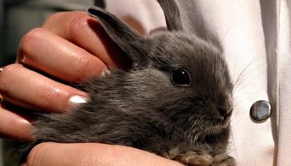 как брать кролика