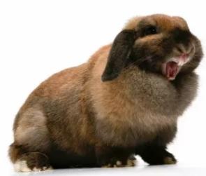 психология кроликов