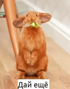 кролик на двух лапах