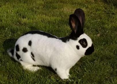 кролики бабочка фото