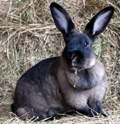 кролики Мардер