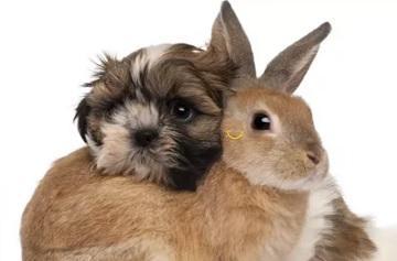кролики и кошки, собаки,