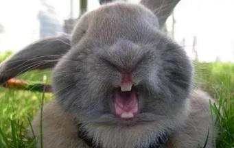 Почему кролик кусается