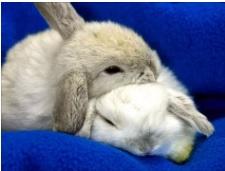 Эмоции кроликов