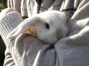 Раны у кролика